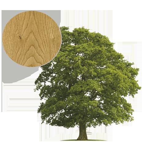 Drzewo dąb