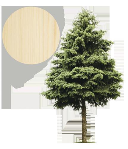 Drzewo świerk