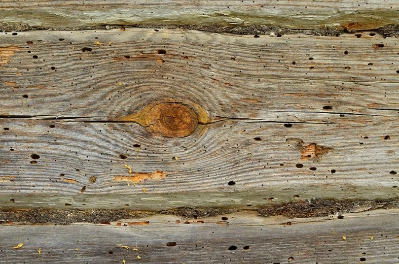 Zniszczone drewno