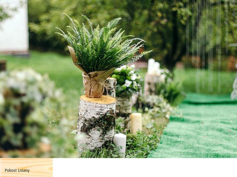Wykorzystanie pieńków wrustykalnym ogrodzie