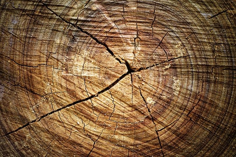 Popękany bal drewna