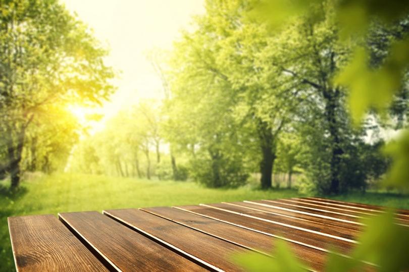 Drewno wogrodzie