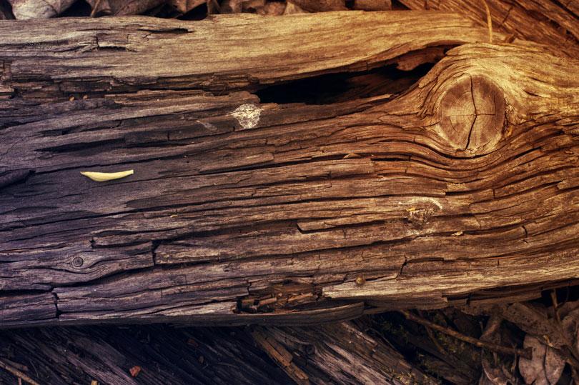 Korozja drewna
