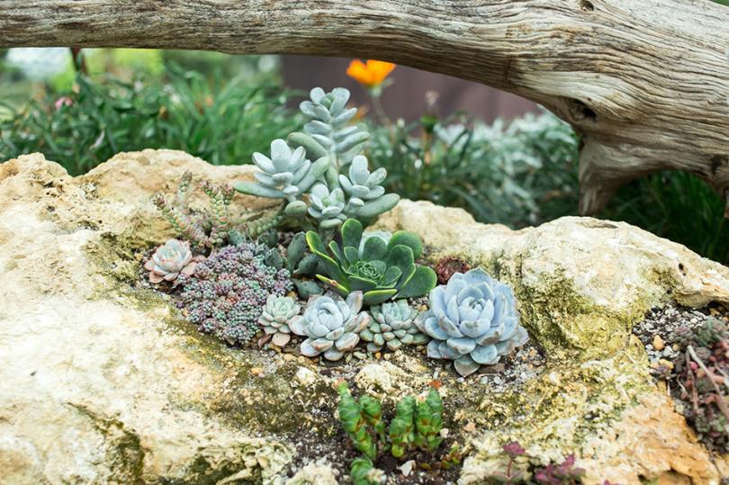 Rośliny wogrodzie
