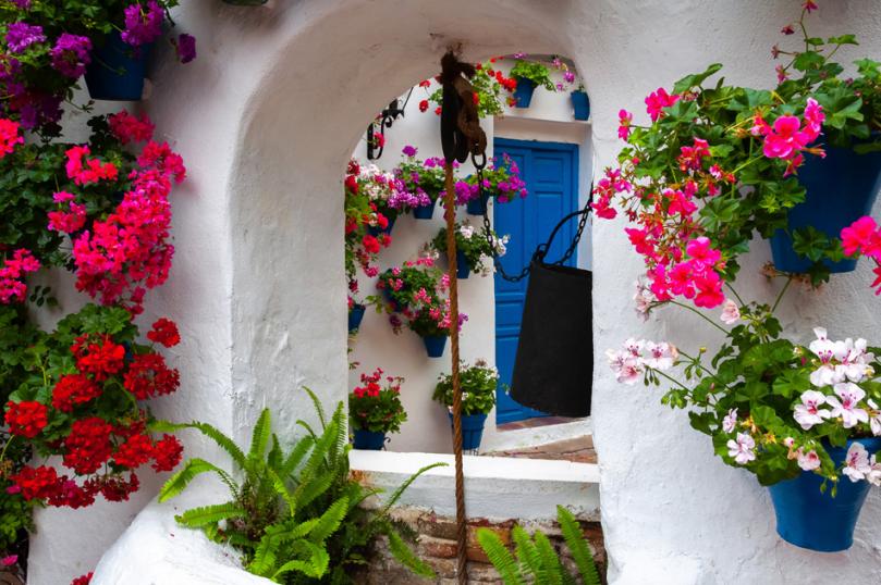 Śródziemnomorskie rośliny zdobiące ogród