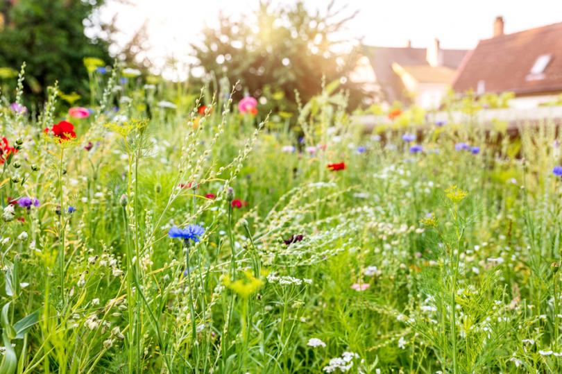 Łąka pełna polnych kwiatów