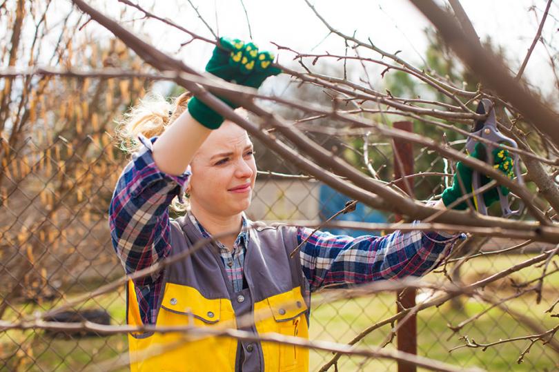 Przycinanie gałęzi wogrodzie