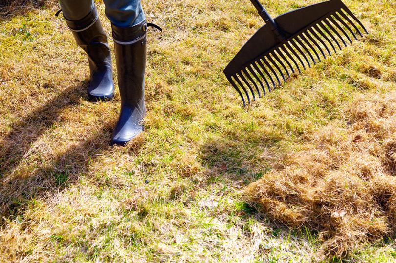 Zagrabianie suchej trawy