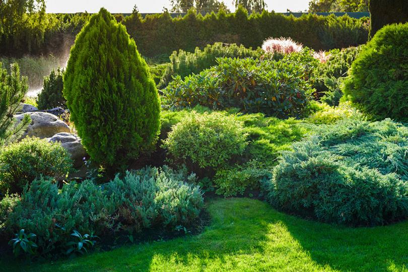 Iglaki ikrzewy wzielonym ogrodzie