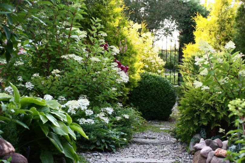 Rośliny ogrodowe