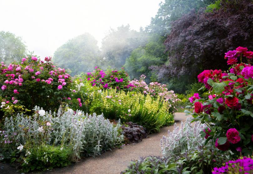 Kolorowe rośliny wromantycznym ogrodzie