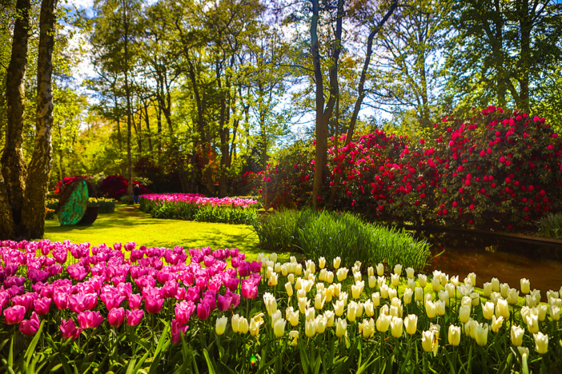 Tulipany wogrodzie wstylu holenderskim