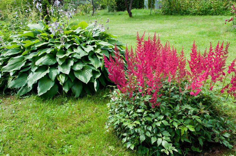 Rośliny do zacienionego ogrodu