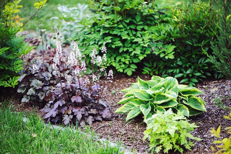 Rośliny ogrodowe, które lubią cień