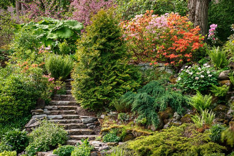 Rośliny całoroczne do ogrodu ze schodami