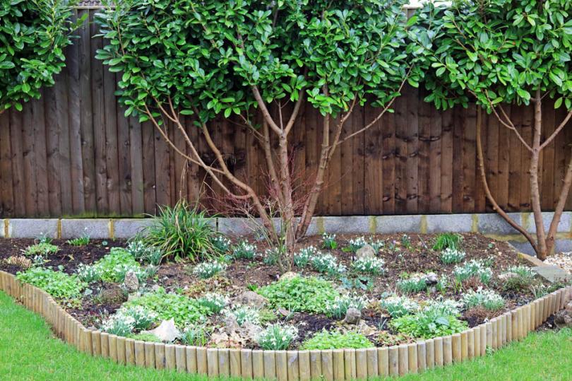 Drewniana palisada wokół drzewa