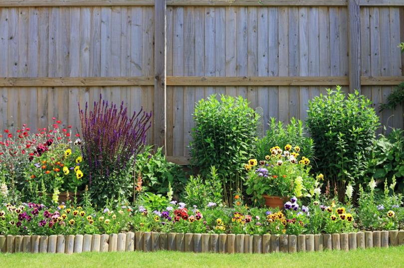 Różne rośliny przy drewnianym płocie
